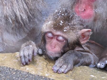 img_3142-_nagano_spa-montain-monkey